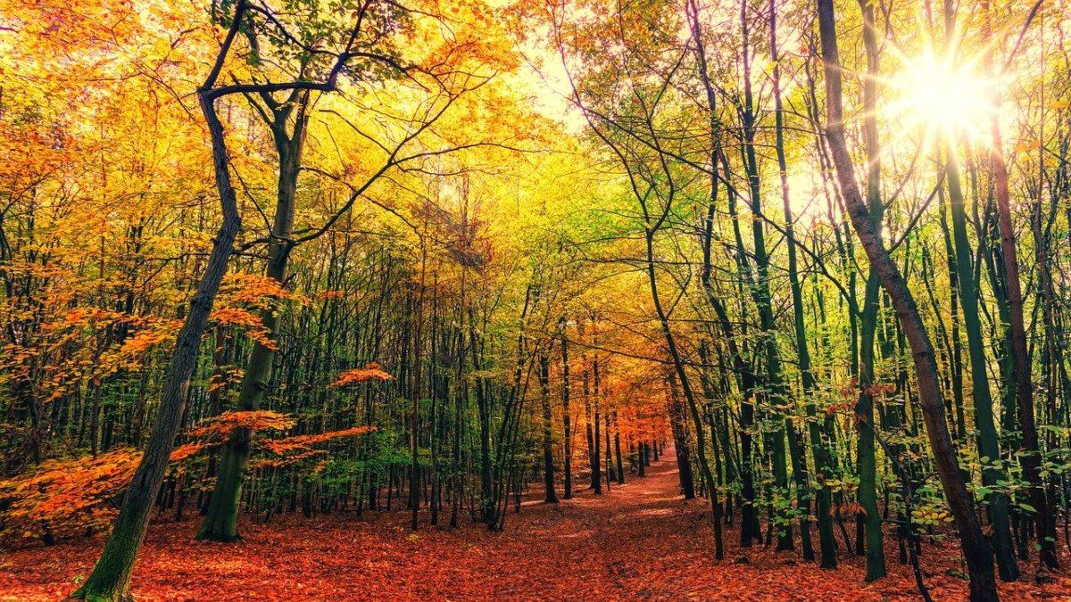 Equinoccio de otoño: todo lo que debes de saber