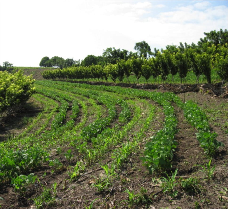 Solución a pérdida del suelo agrícola por lluvias