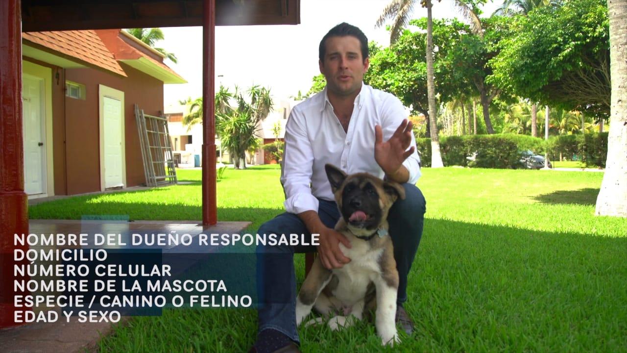 Bingen donará 100 esterilizaciones para perros y gatos