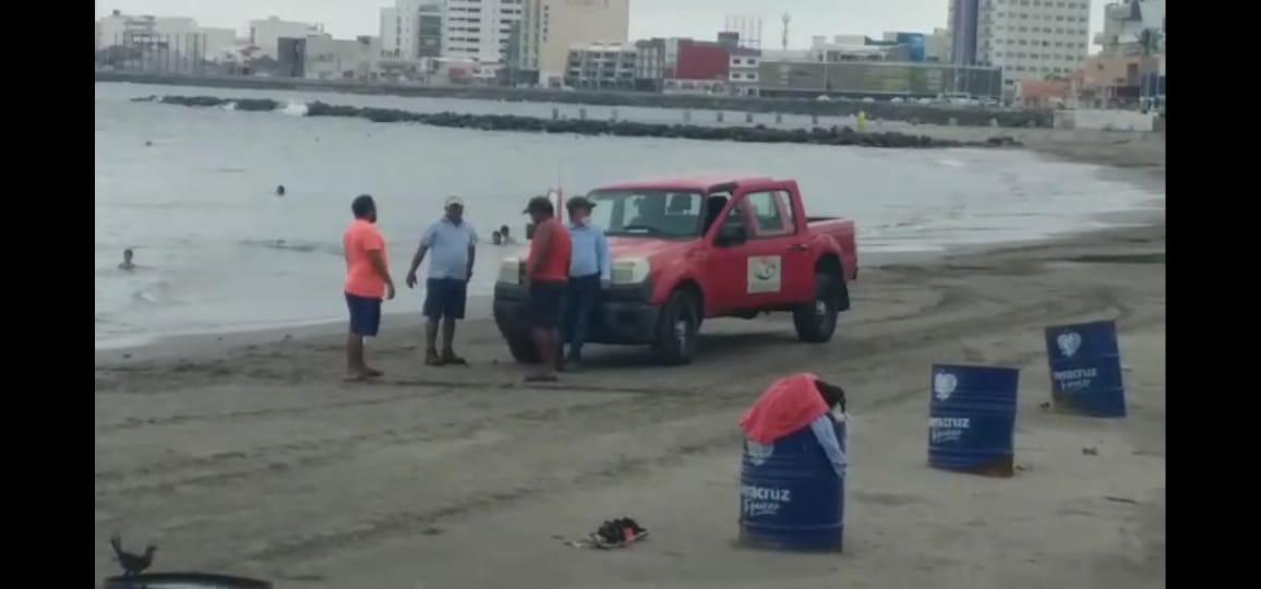 Encuentran tortuga verde muerta en playa Martí de Veracruz