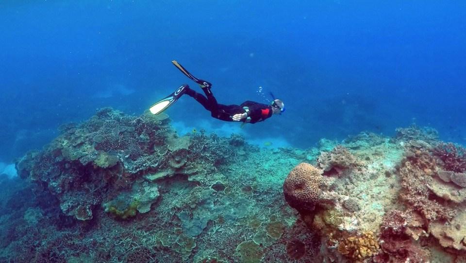 Descubren en Australia un coral más alto que el Empire State.