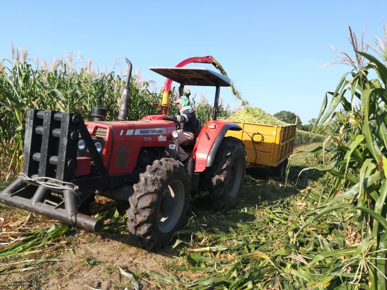 Campo Experimental de Cotaxtla crea maíz híbrido resistente a la sequía