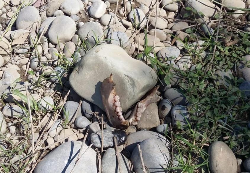 Pescadores encuentran restos humanos a orilla del río