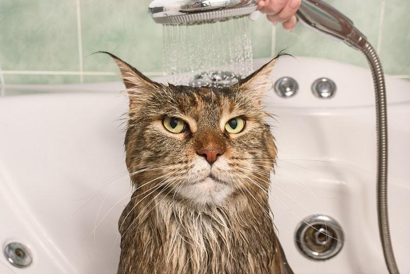 ¿Un gato puede bañarse con productos de aseo humano?