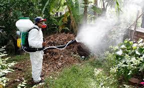Reanudan programa de fumigación contra el dengue
