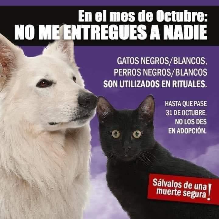 En octubre se dispara 70% la adopción de gatos negros para rituales