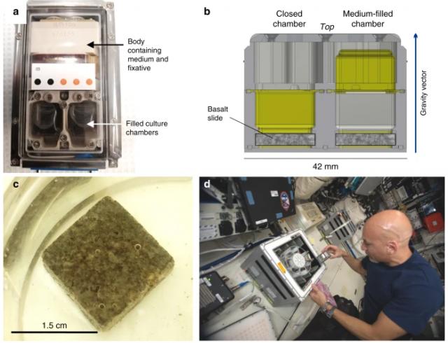 Bacteria terrestres podrían extraer minerales en la luna.