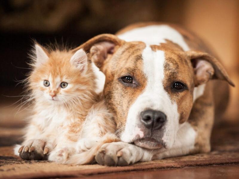 BBVA lanza el primer seguro para mascotas