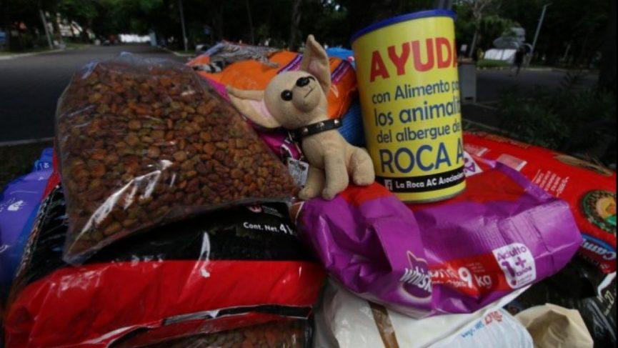 Persiste el abandono de perros y gatos en Veracruz