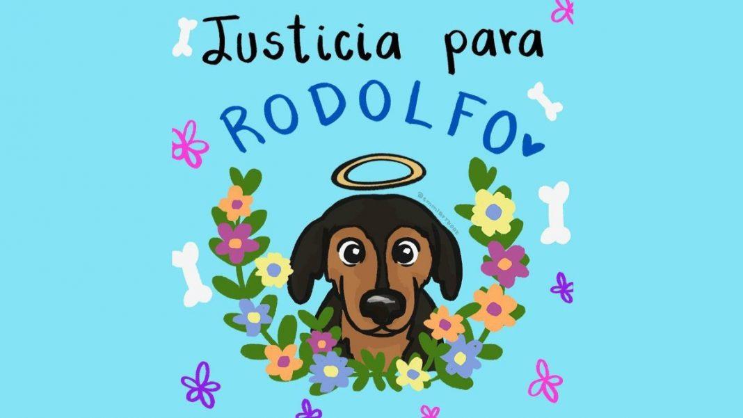 """Justicia para Rodolfo"": acusan a hombre de matar a un perrito en Sinaloa"