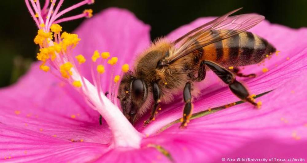 Tu jardín es un hábitat de polinizadores