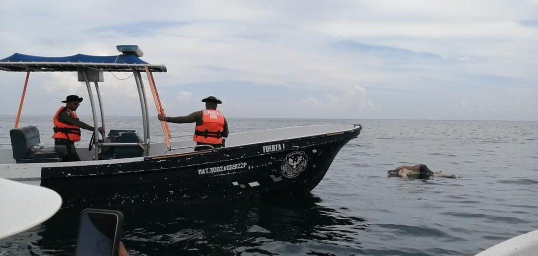 Encuentran cadáver flotando en la zona de Antón Lizardo