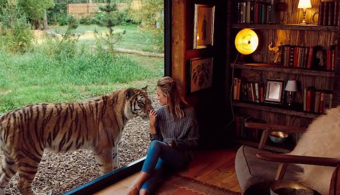 Hotel ofrece a sus clientes hospedarse con tigres en Reino Unido