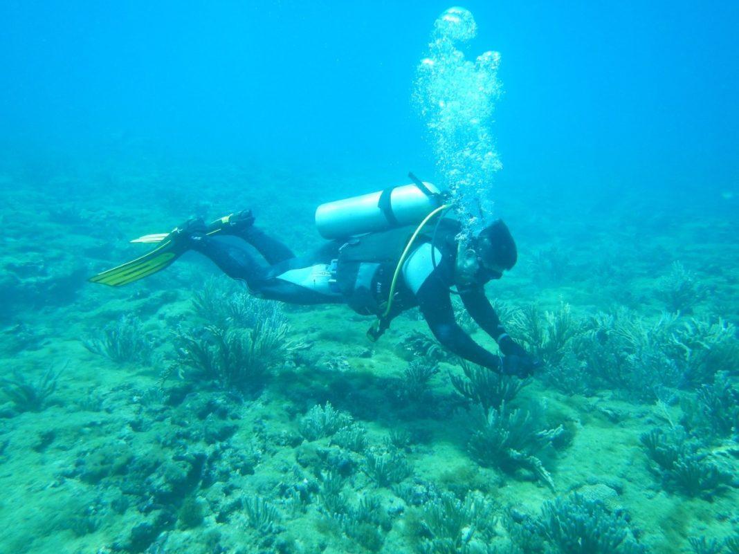 UV y Apiver realizan prueba piloto de arrecifes artificiales en costas de Veracruz