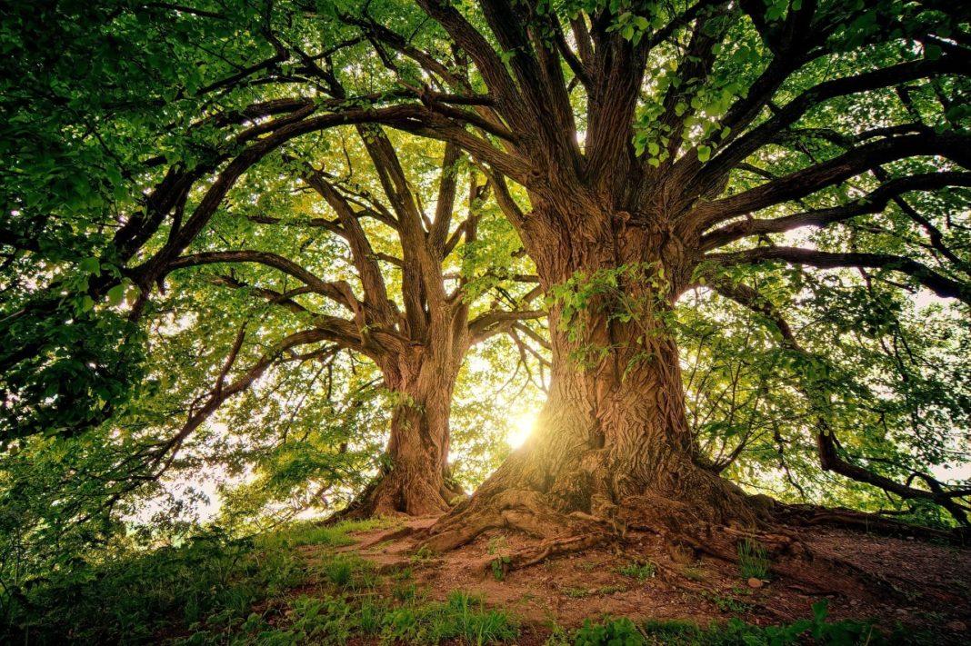 Promotores Ambientales: la importancia de los árboles y su valor cultural