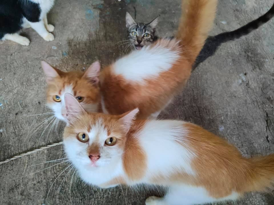 """Invita a Pasarela de Adopciones felinas """"Michis de todos los colores"""""""