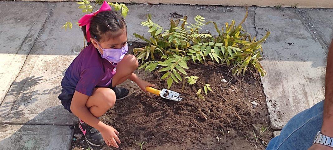 Siembran árboles en el Club Ambiental del Colegio Latino Veracruz-CEULVER