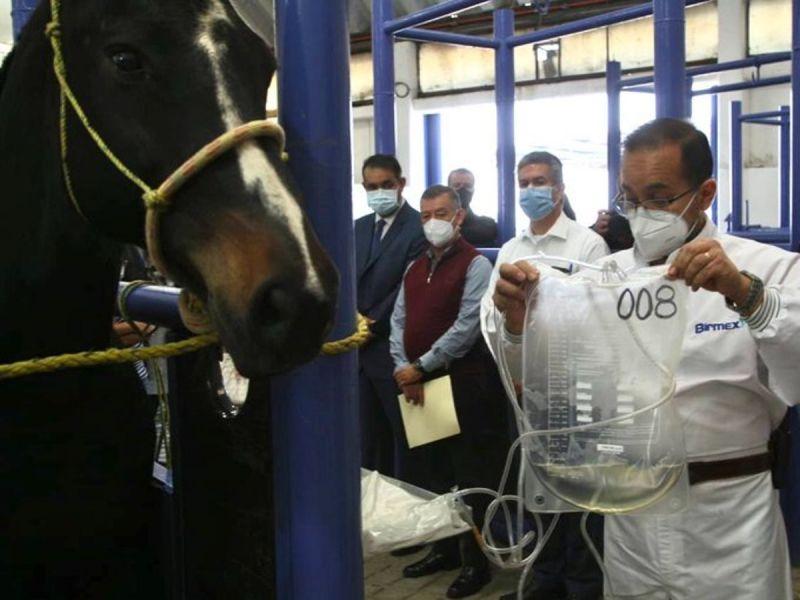 México inicia producción de suero de caballo para tratamiento contra Covid-19